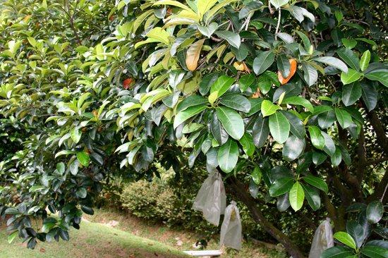 Putrajaya Botanical Garden : Сад