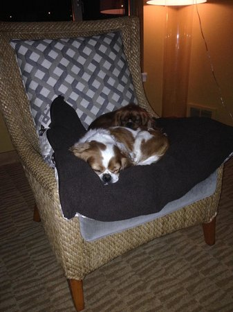 Kimpton RiverPlace Hotel: Sadie Mae Mae loves the Riverplace
