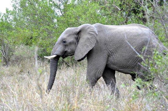 Tydon Bush Camp : Elephant