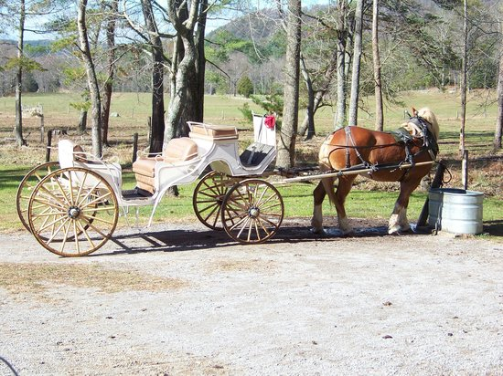 Cades Cove Riding Stables : Our Carriage That Awaited Us