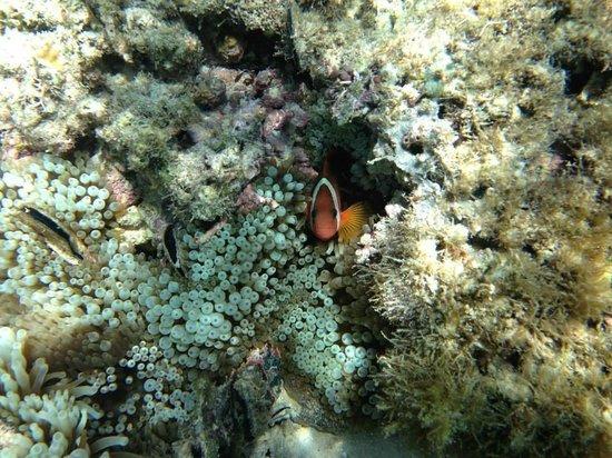 Erakor Island Resort & Spa: There's Nemo