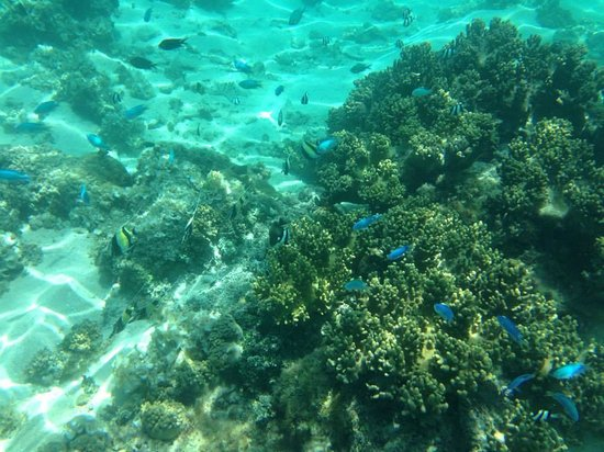 Erakor Island Resort & Spa : Assorted Fish