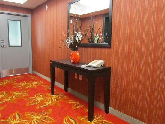 Hampton Inn & Suites Albany at Albany Mall : hallway decor