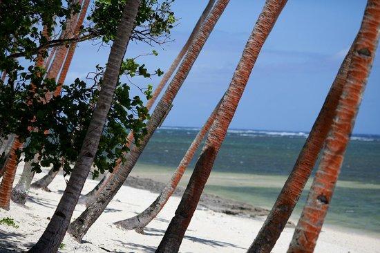 Tambua Sands: Coconut palm trees
