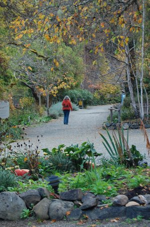 Orr Hot Springs: a fall stroll through the grounds