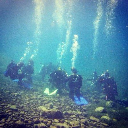 Balmorhea State Park : Scuba class