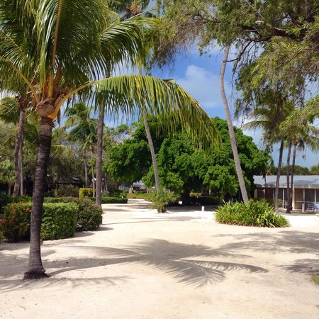 Islander Resort, a Guy Harvey Outpost: Courtyard/paths leading from beach to room