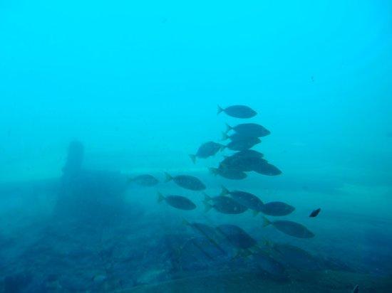 Busselton Jetty: Underwater Observatory