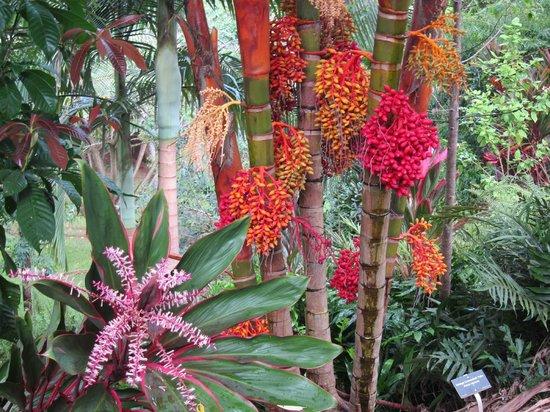 Princeville Botanical Gardens - Tours: garden