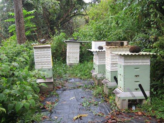 Princeville Botanical Gardens - Tours: bees
