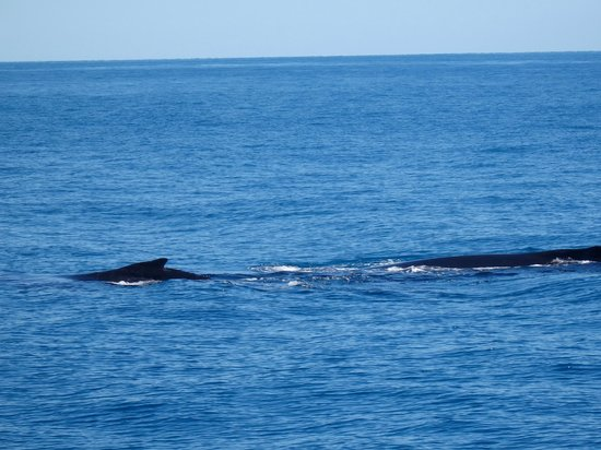 Legend Charters: Humpback Whales