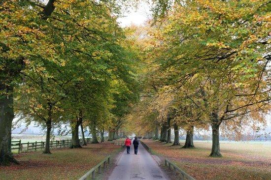 Babington House: Autumn drive