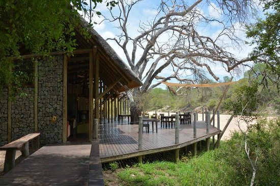 Rhino Walking Safaris at Plains Camp: the bar