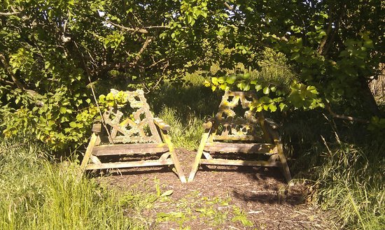 St Andrews Escape: In the orchard