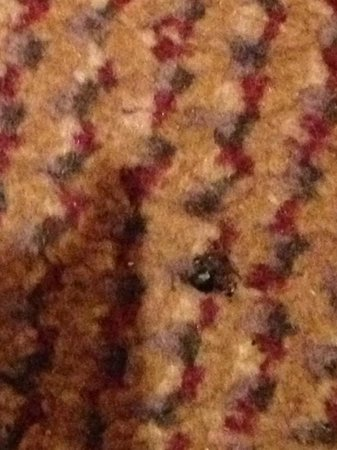 Crowne Plaza Hotel Birmingham NEC : Dead fly immediately inside my door AFTER a so called