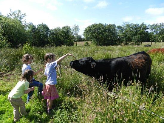 Wheatland Farm eco lodges: Grazing in the nature reserve