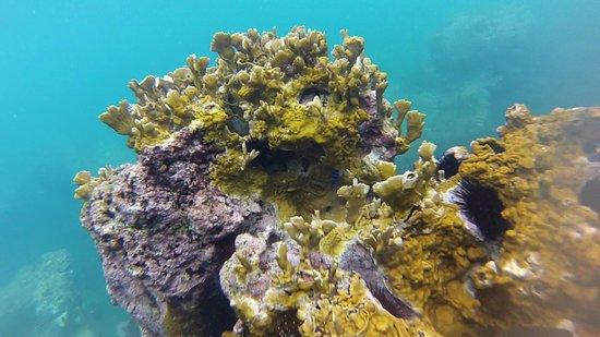 Bleu des Iles : La plongée