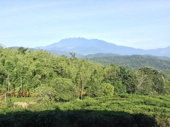 Sabah Tea Garden: mt Kinabalu from the restsurant