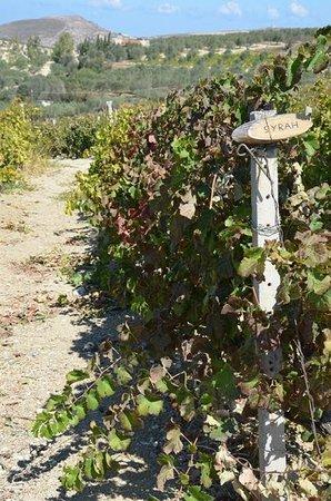 Boutari Winery: виноградники