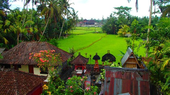 Saudara Home: view from the terrace