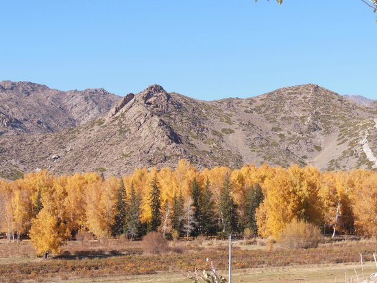 Xinjiang County, China: yellow tree leaves