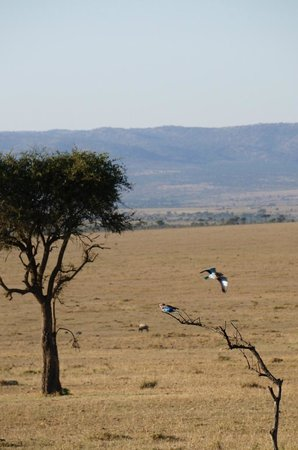 Gamewatchers Adventure Camp, Ol Kinyei : Bird @ Ol Kinyei Conservancy