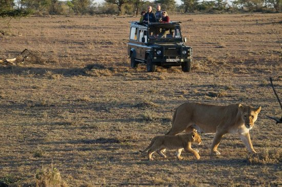 Gamewatchers Adventure Camp, Ol Kinyei : Lions @ Ol Kinyei Conservancy