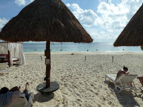 Privilege Aluxes: Beach
