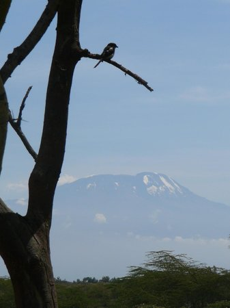 Hatari Lodge : Views on Kilimanjaro