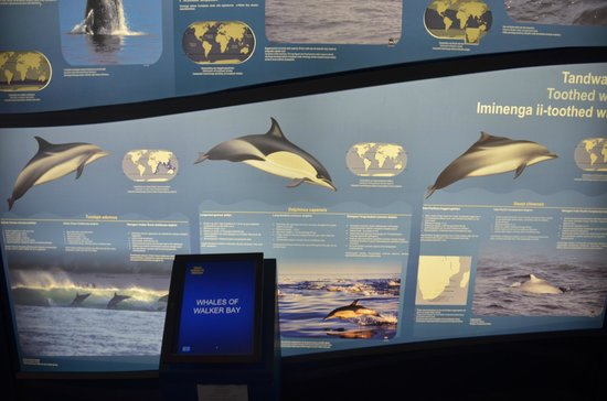 The Whale House Museum: Information Boards