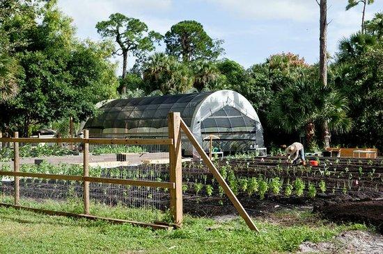 Hippocrates Health Institute : Organic Garden