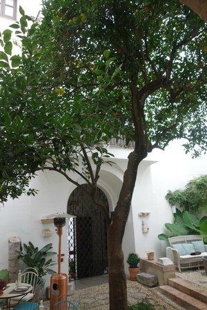 Balcon de Cordoba : l'oranger