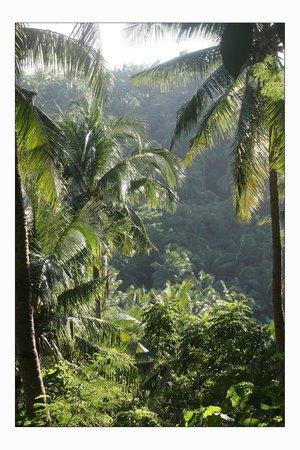 Coco Beach Island Resort: Вид из спа-центра