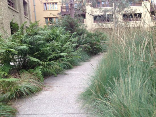 The Lodge at Torrey Pines: Interior courtyard - the view a garden-view room would see. Lovely native specimens.