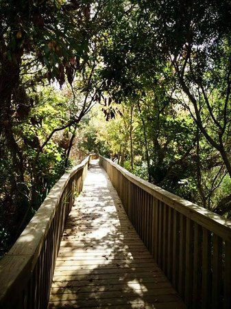 Sea Pines Forest Preserve: Scenic walking paths