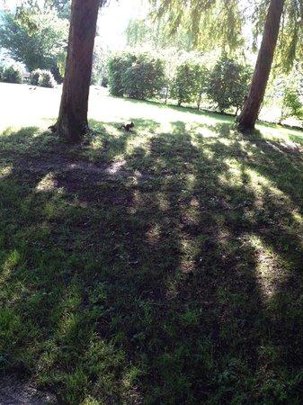 Clarion Hotel Chateau Belmont : Scoiattolo nel parco