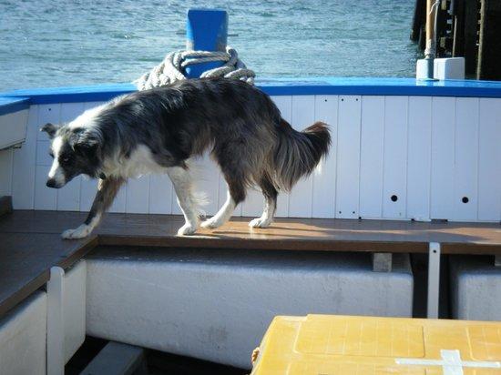 Caldey Island: The dog on the boat