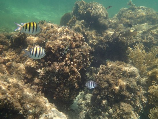 Marina La Bonita : snorkeling