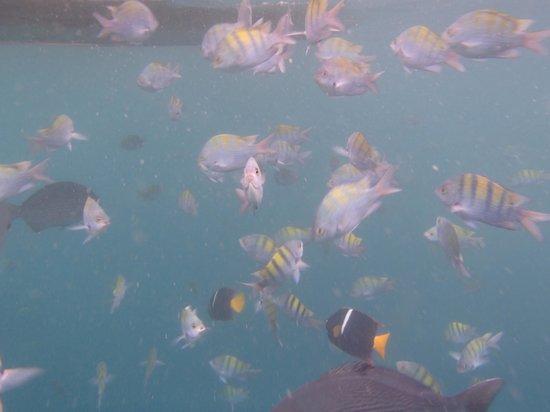 Los Arcos: vue dans l'eau