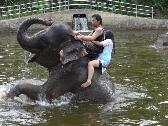 Elephant Safari Park & Lodge: Swimming with the elephant