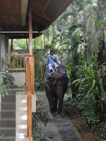 Elephant Safari Park & Lodge: Safari ride