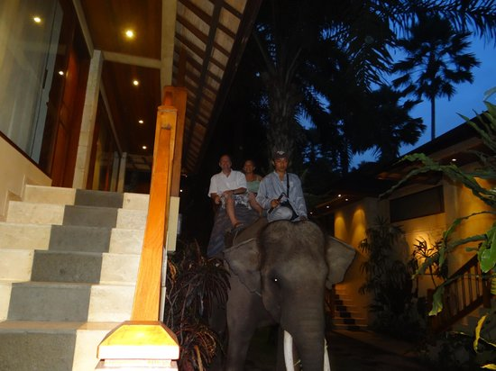 Elephant Safari Park & Lodge: Dinner chaffeur
