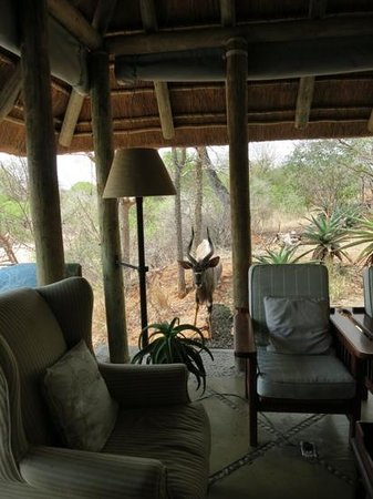 Thornybush Game Lodge : Where is the bar?