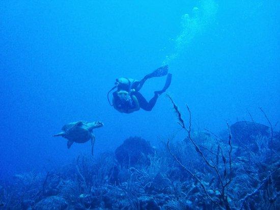 The Dive Shop Ltd.: Muitas tartarugas!!!