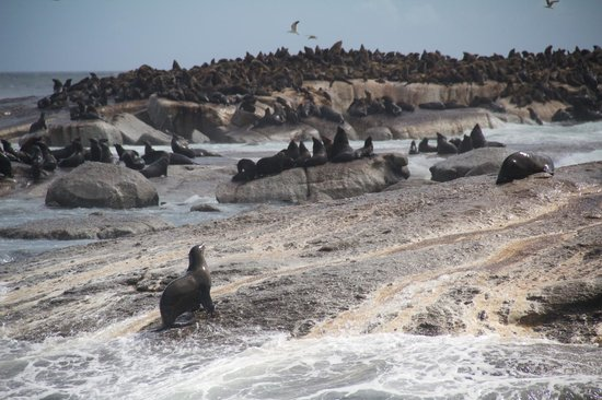 Mytours Day Tours: Hout Bay - Seal Colony