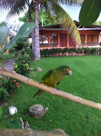 Punta Roca Surf Resort: A little visitor at Punta Roca