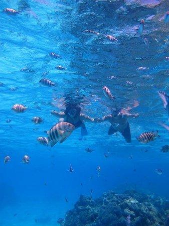 Bora Bora Photo Lagoon : Snorkeling shot, not great quality, just ok