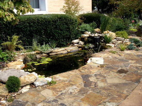 Higher Ground Hotel: waterfall and pond