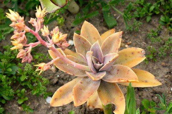 Bear Trap Lodge : More garden succulents