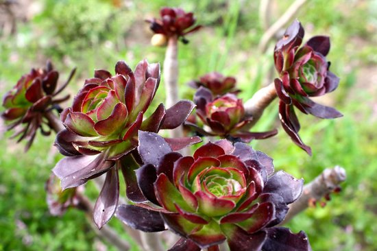 Bear Trap Lodge : Garden succulents
